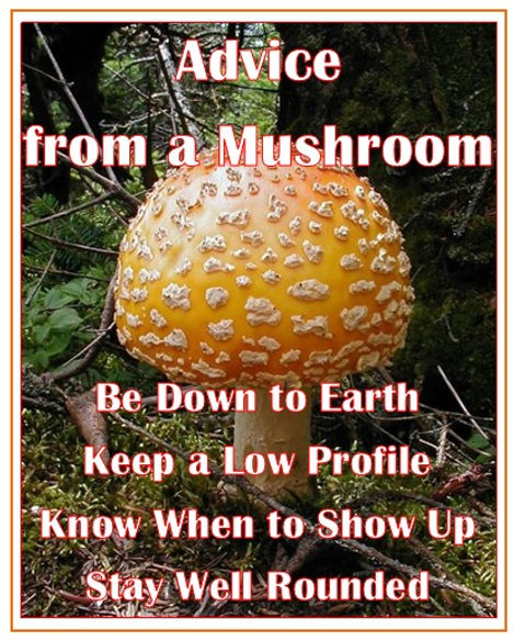 advice from a mushroom.jpg