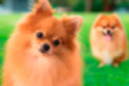 banner-spitz4.png