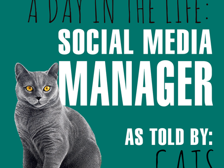 A Day in the Life of a Social Media Manager: As Told By Cats