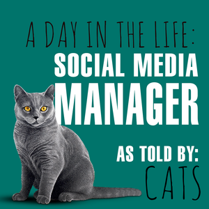 A Day in the Life of a Social Media Manager Cats