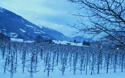 Winter_edited