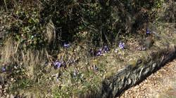 Frühling kehrt ein