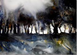 Jan Wright