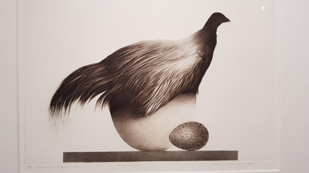 Fugl på egg
