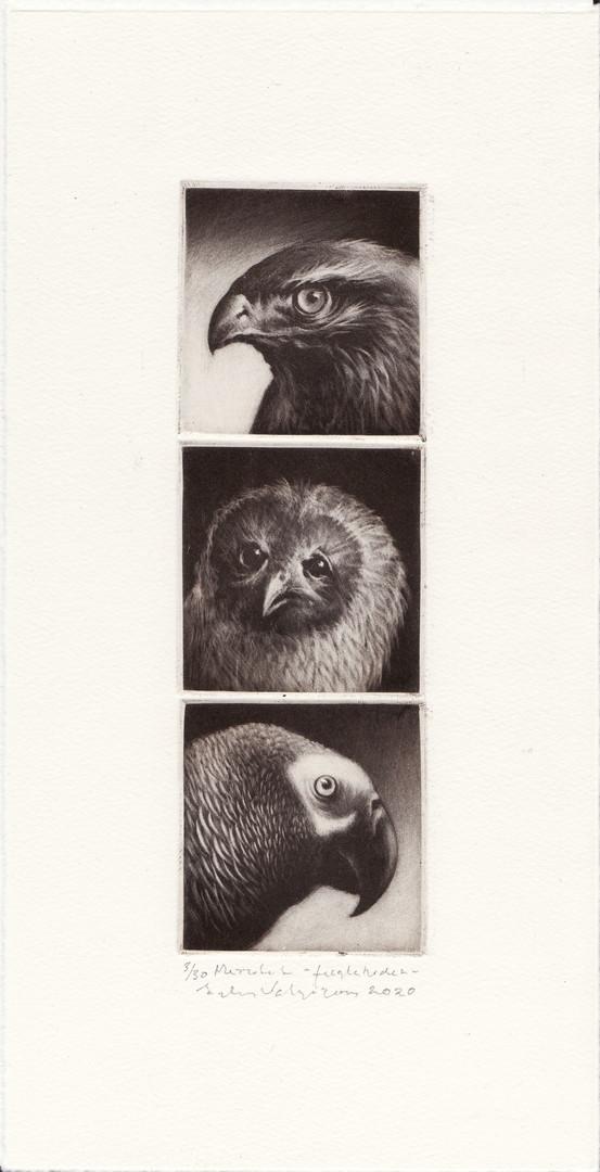 """""""Fuglehoder"""""""