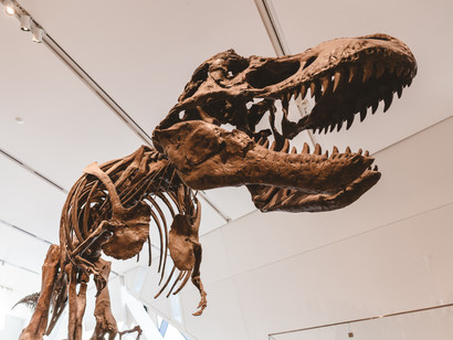 Court Rules that Fossils are Minerals