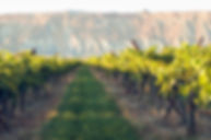 Palisade Vineyard.jpg