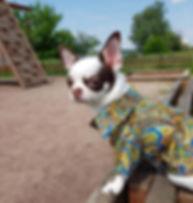 курс кроя и шитья одежды для собак.jpg