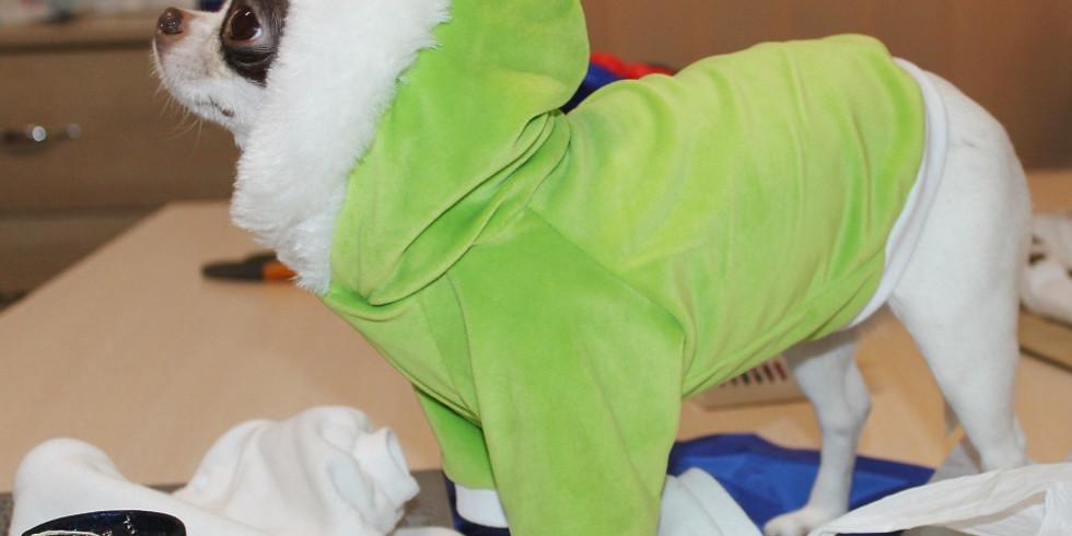 """""""Одежда для домашних любимцев"""" курс кроя и шитья для новичков. (четверг с 13:30 до 17:00)"""