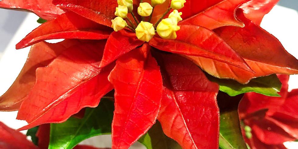 МК: сахарный рождественский цветок в английской технике.