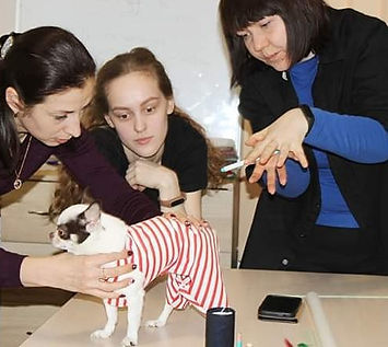 Одежда для собак курсы кроя и шитья