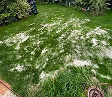 Rasen sanden leicht gemacht