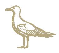 Fishsteria_Web_Element_Indivital_Bird.pn