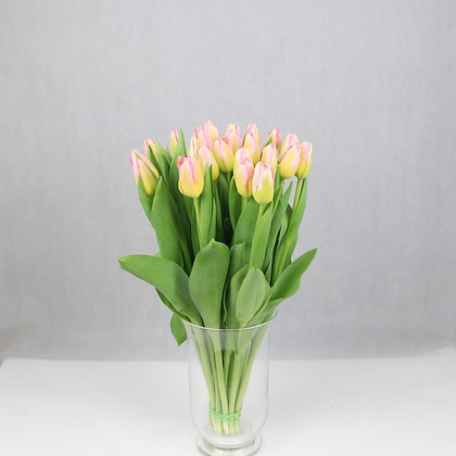 Tulipany klasyczne różowo-żółte