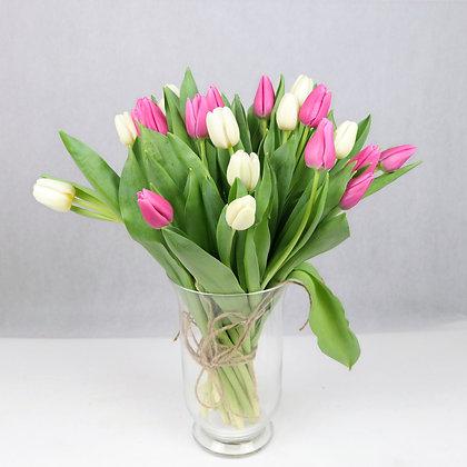Tulipany klasyczne mix kolorów