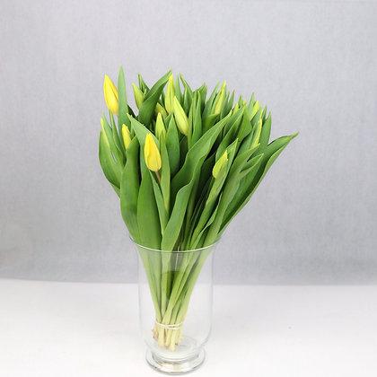 Tulipany klasyczne Żółte