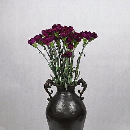 Goździk Pełny Ciemny fiolet