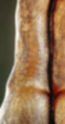 Symbol Pixel. Eres ese símbolo de mi esencia, escondido durante algún tiempo.Pero no podías estar en la sombra, debías salir y demostrar al mundo, que es posible soñar. Obra de Elisabeth Martín Maíllo