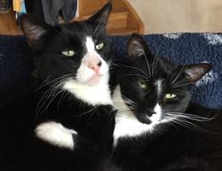 Morgan & Jack - brothers