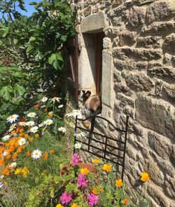 Rollo - enjoying a warm perch!