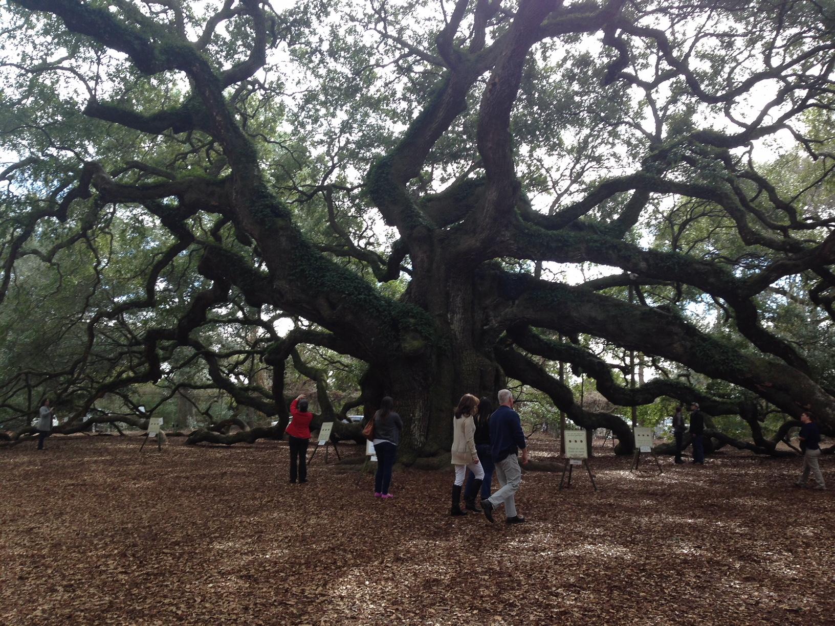 Angel Oak Tree South Carolina