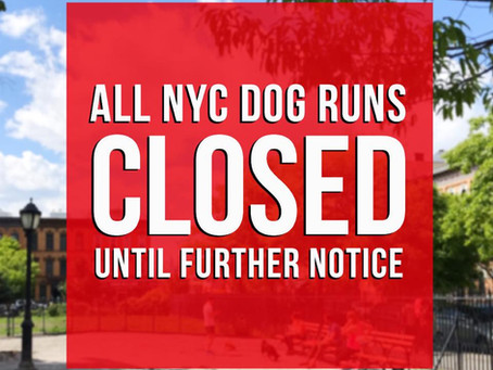All NYC Dog Runs To Close Due to COVID-19