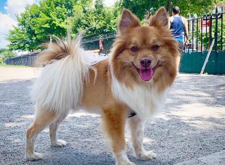 Dog Runs Will Reopen Monday, July 6