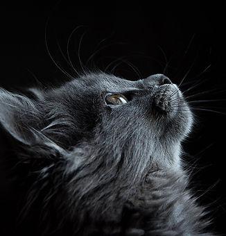 new-uplooking-cat.jpg