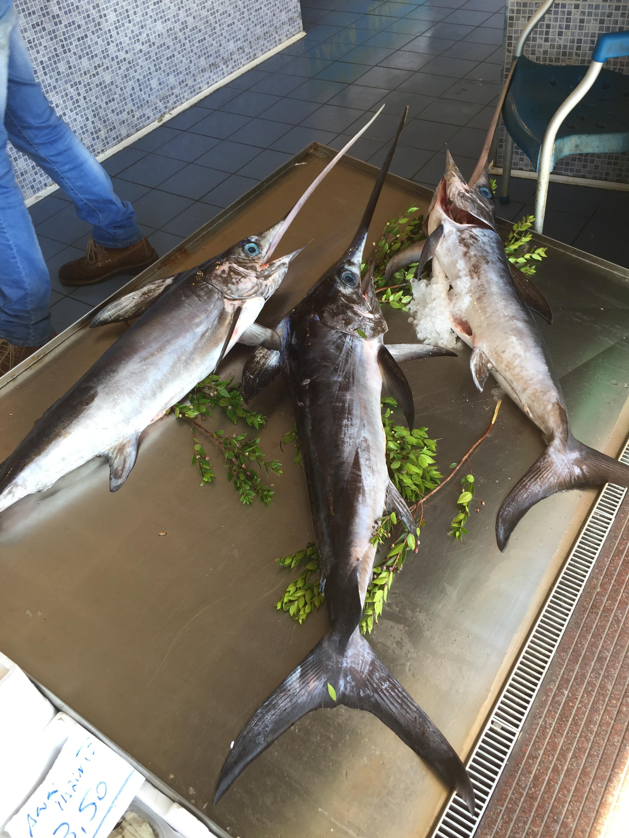 Im Fischladen