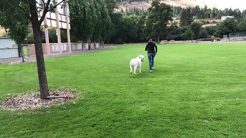 Central Asian Shepherd dogs USA!