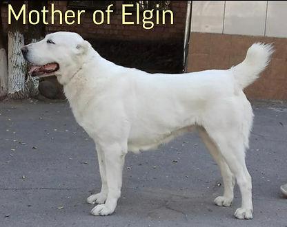 ELGIN'S MOTHER.jpg