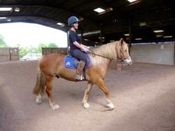horse in school