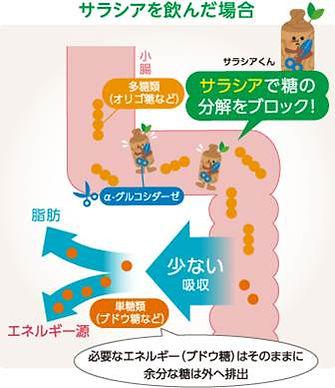 コロナ太りに。アーユル茶。サラシアのお茶。余分な糖分の吸収を防ぐ。腸内の悪玉菌を減らして便通を整えることにより、美肌を取り戻す。糖尿病予防。