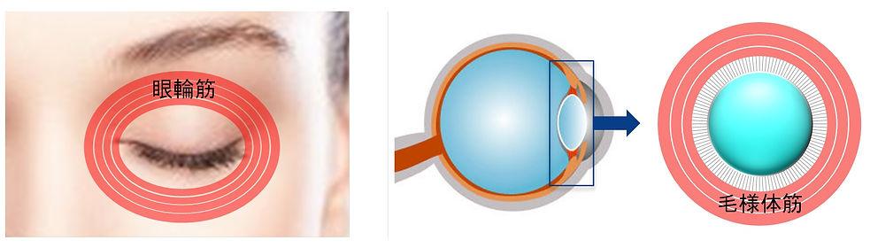 アイトリートメント,アイウエーブ,アイウェーブ,eyewave,eye wave,アイウエイブ,目の疲れ,スマホ老眼,老眼,スマホ,PC,老け顔,眼精疲労,ホームステイによる視力低下