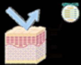 PLTシステムによる両親媒性システム。個々のトラブルに特化したアイテム。セネシオトピカルセラム。サクランボのビタミンC。米ぬかフェルラ酸。トマトのビタミンB3。