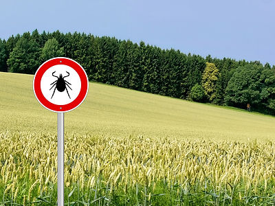 tick insect warning sign in nature.jpg