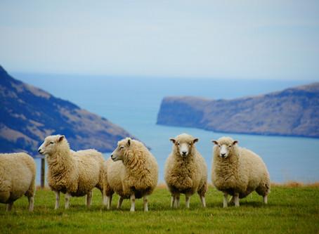 Agneau de Nouvelle-Zélande