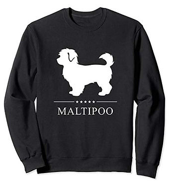 White-Stars-Sweatshirt-Maltipoo.jpg