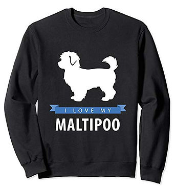 White-Love-sweatshirt-Maltipoo.jpg