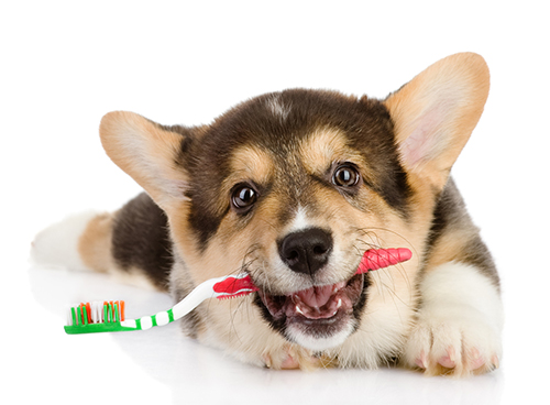 Image result for dog dental