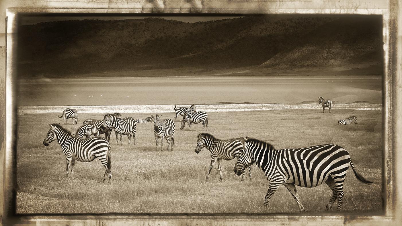 Cebras con Paisaje