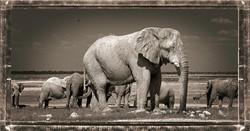 Elefante Macho
