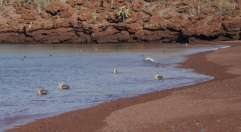 Paisaje con pelicanos web