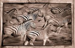 Cebras Corriendo