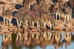 Cebras y espejo