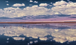 Flamingos en Atacama