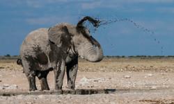 Elefante en charco