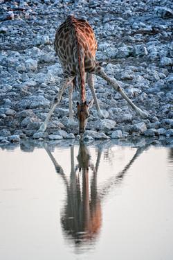 Girafa y espejo