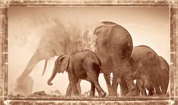 Elefantes en el Polvo