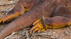 Iguana y grillo web